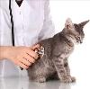 Ветеринарные клиники в Лаишево